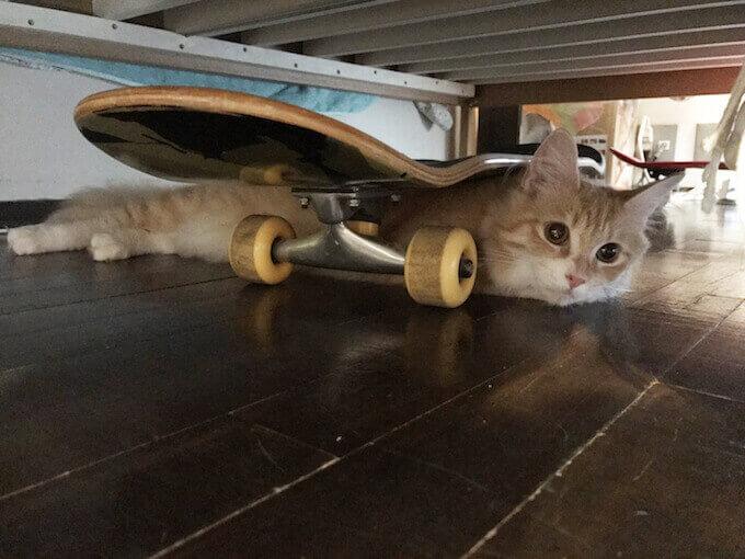 キャットフードを欲しがる猫
