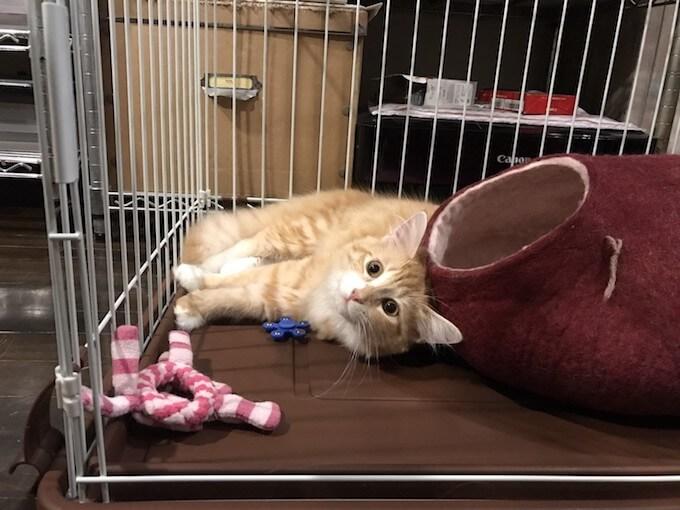 キャットドームで遊ぶ猫
