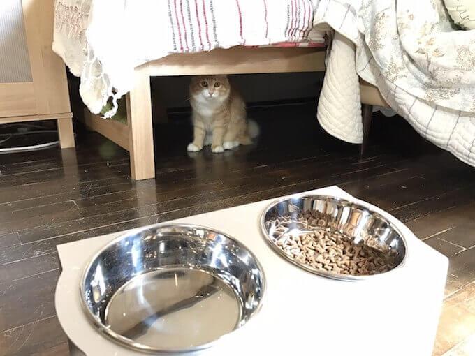 ベッドの下に隠れる愛猫のさく