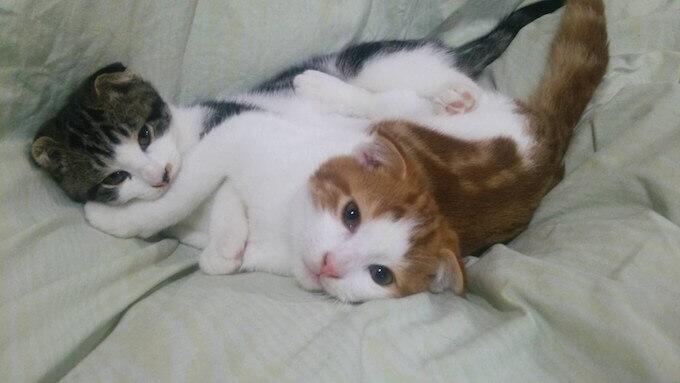 仲良し子猫