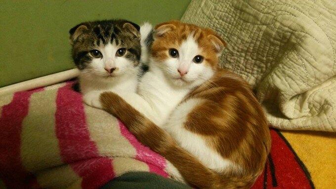 兄弟猫のアーサーとイブ