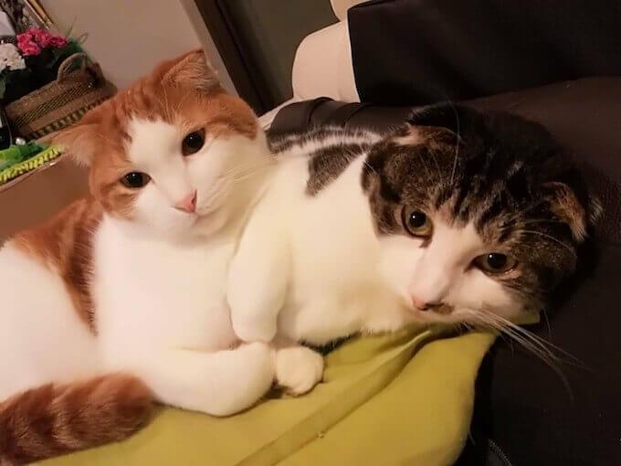 子猫のイブとアーサー
