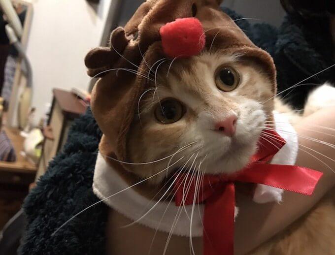 トナカイの被り物をした猫