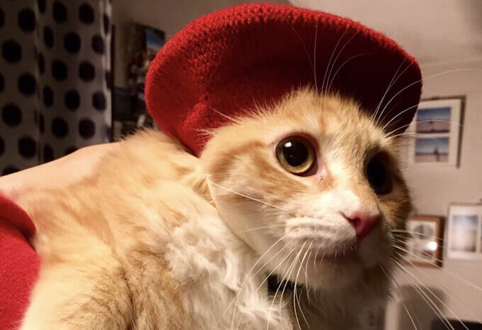 ベレー帽をかぶった猫