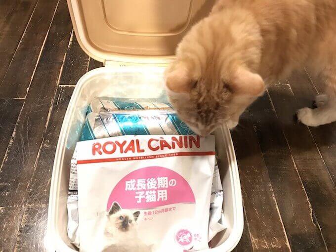 猫がフードストッカーに興味を示しても安心