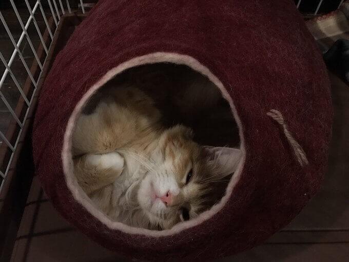 猫用テイストオブザワイルドの栄養成分と安全性の口コミ評判