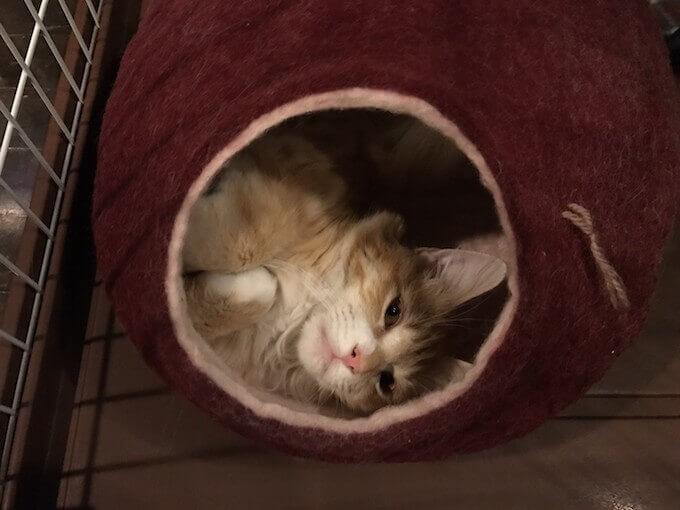 キャットドームでうとうと眠そうな猫
