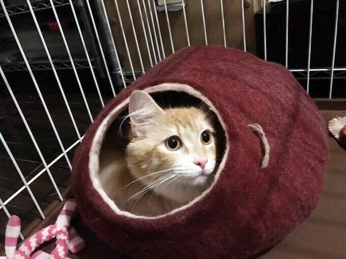 キャットドームに入る猫