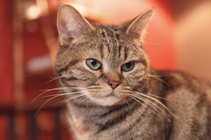 少し不機嫌な猫