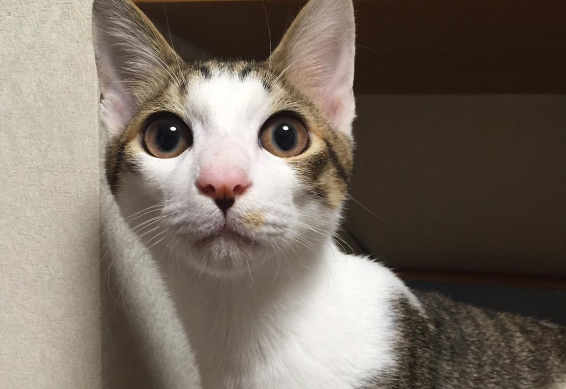 しょんぼりした猫のサブロー