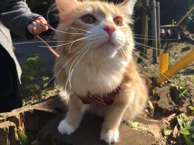 丸太に乗るかわいい猫