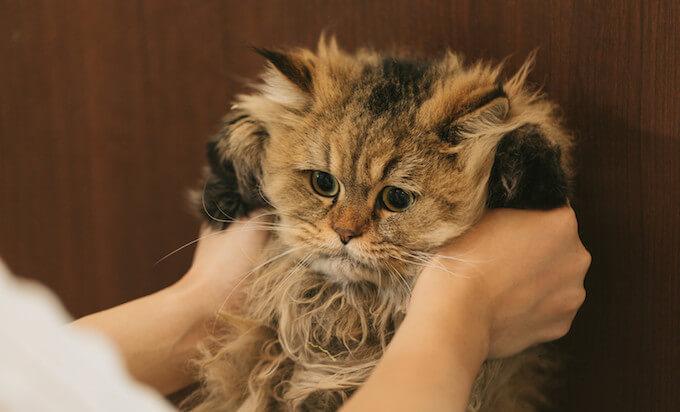 猫用グリーンフィッシュの栄養成分と安全性の口コミ評判