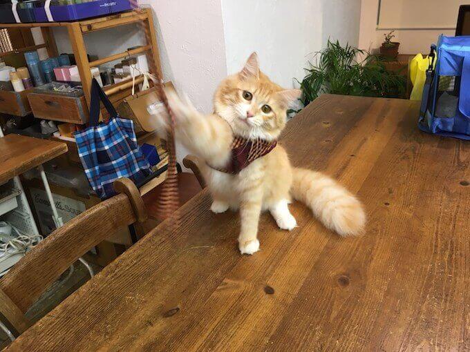 机で遊ぶ猫