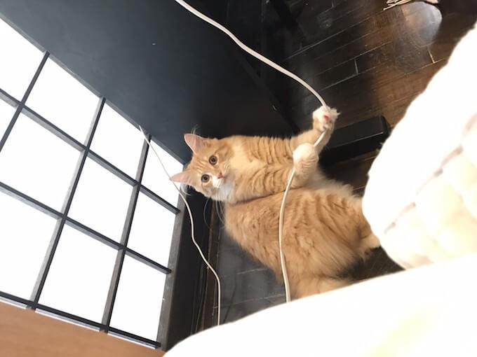コードを引っ張る猫