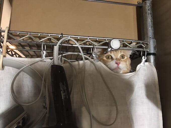 スチールラックから除く猫