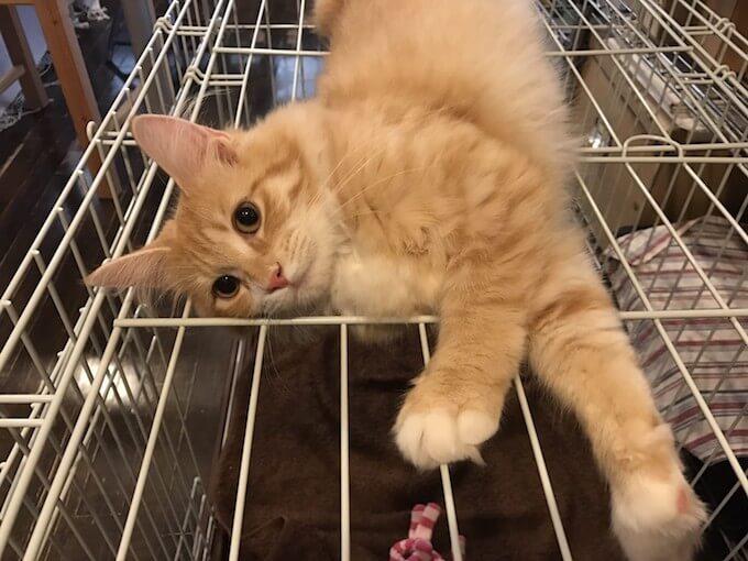 柵の上で遊ぶ猫