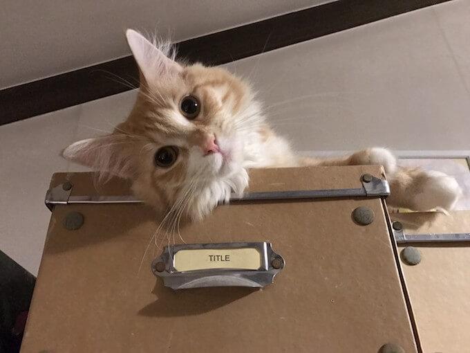 天井で遊ぶ猫