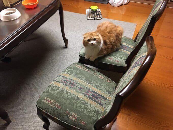椅子の上で遊ぶ猫