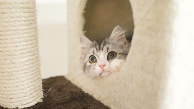 キャットドームに隠れる猫