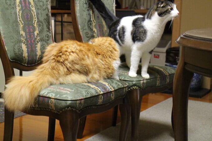 猫2匹で遊ぶ