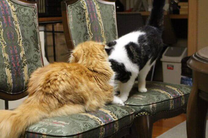 仲良く遊ぶ猫