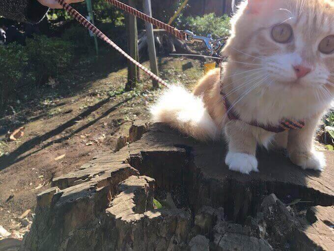 丸太で遊ぶ猫