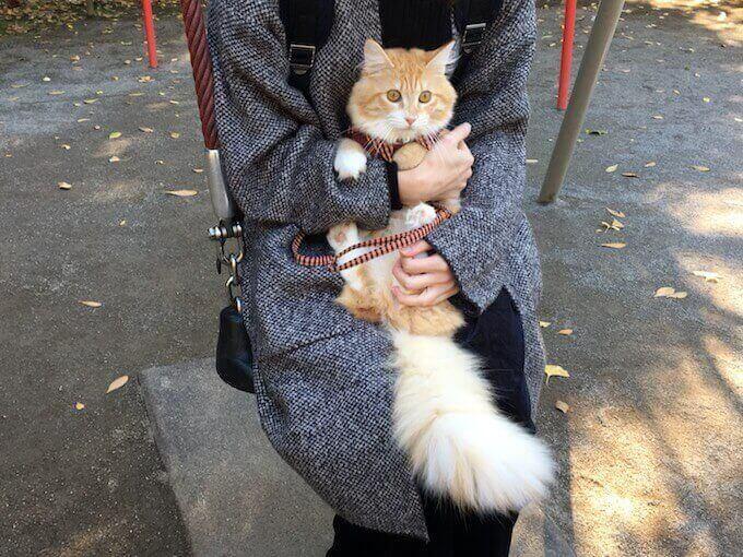 ブランコで飼い主と遊ぶ猫