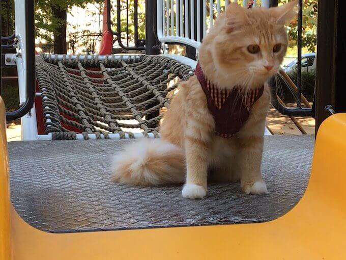 滑り台で遊ぶ猫
