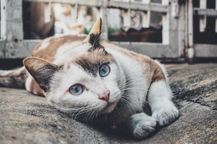 外で遊ぶ猫