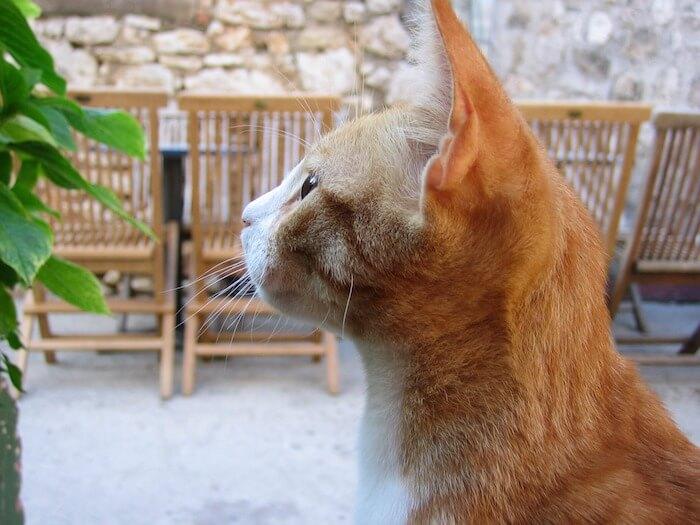 テラスで遊ぶ猫