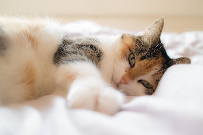 猫用フィーラインナチュラルの栄養成分と安全性の口コミ評判