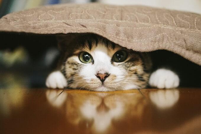 布に隠れる猫