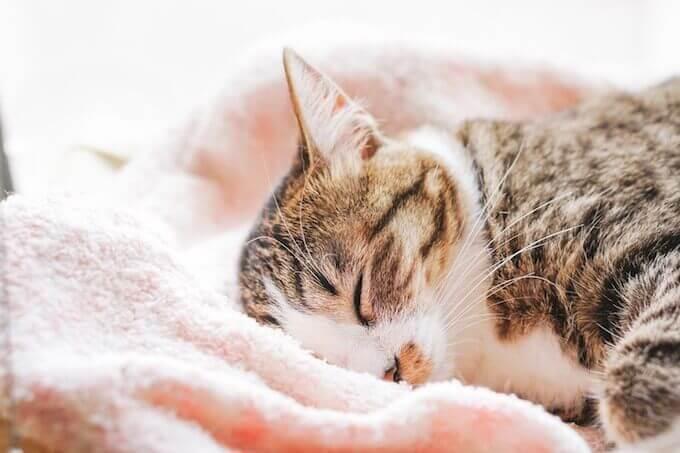 ベットで眠る猫