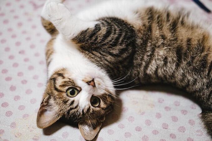 ベッドで遊ぶ猫