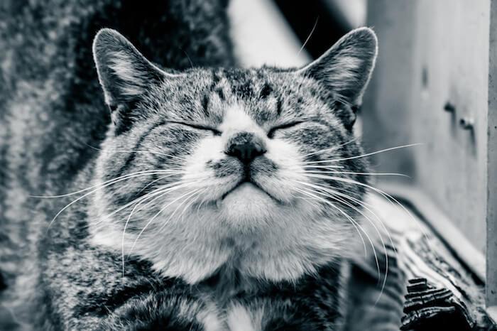 ご満悦の猫