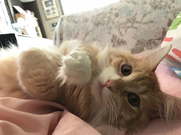 ベッドでたわむれる猫