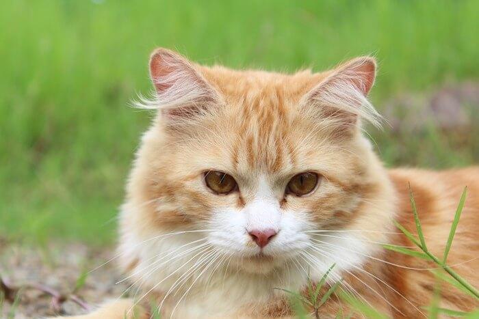 草原で遊ぶ猫
