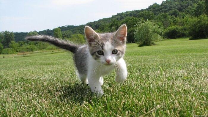 草原を走る子猫