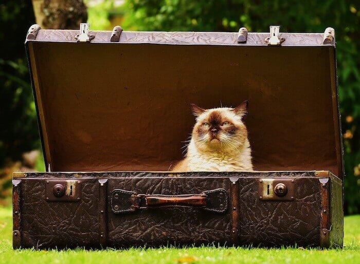 バッグで遊ぶ猫
