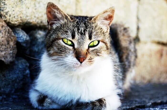 道端で睨む猫