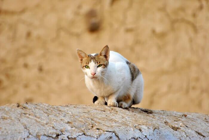 岩で遊ぶ猫