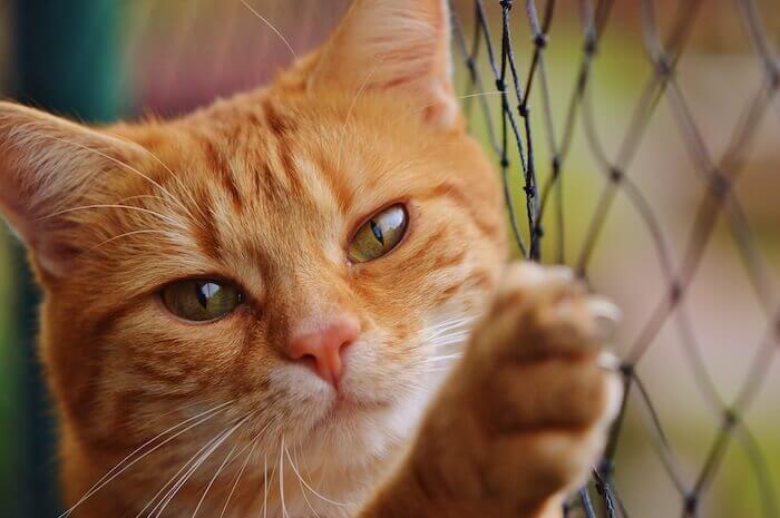金網につかまる猫