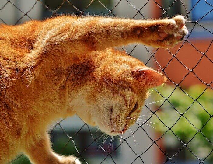 金網で遊ぶ猫