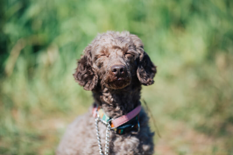 犬用サイエンスダイエットの栄養成分と安全性の口コミ評判